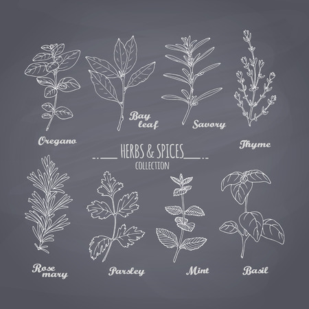 condiments: Set of hand drawn spicy herbs on chalkboard background. Chalk style condiments for your design. Vector illustration