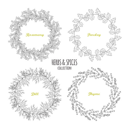 Spicy herb circle frames collection. Hand drawn rosemary, parsley, dill, thyme. Kitchen background. Vector illustration