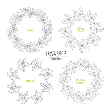 Spicy herb circle frames collection. Hand drawn sage, bay leaf, basil, curry. Kitchen background. Vector illustration Illustration
