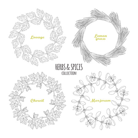 marjoram: Spicy herb circle frames collection. Hand drawn lovage, lemongrass, chervil, marjoram. Kitchen background. Vector illustration Illustration