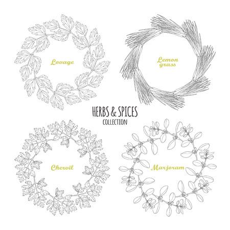 marjoram: Spicy herb circle frames collection. Hand drawn lovage, lemongrass, chervil, marjoram. Kitchen background. Vector illustration Illustration