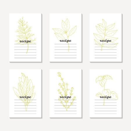 leaf illustration: Recipe cards collection with hand drawn spicy herbs. Sketched dill, bay leaf, curry, sage, basil, thyme. Culinary template, kitchen background. Vector illustration