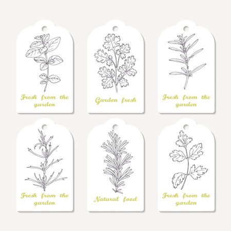 tarragon: Tags collection with hand drawn spicy herbs. Sketched oregano, cilantro, savory, tarragon, rosemary, parsley. Culinary background. Vector illustration