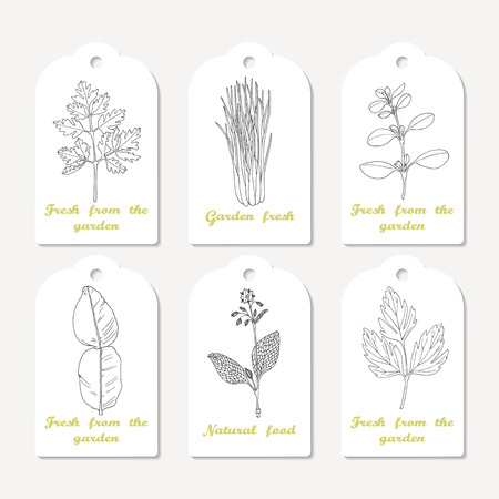 marjoram: Tags collection with hand drawn spicy herbs. Sketched chervil, lovage, lemongrass, marjoram, kaffir lime, borage. Culinary template, kitchen background. Vector illustration