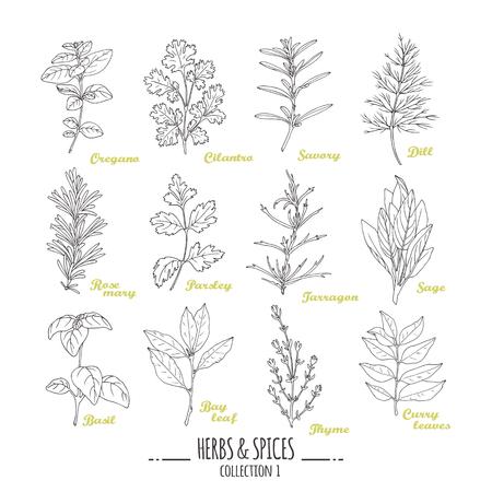 Hand gezeichnete Kräuter und Gewürze Sammlung. Gliederungs Stil Gewürze. Vektor-Illustration