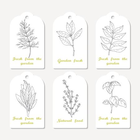 手でタグのコレクションには、スパイシーなハーブが描かれています。スケッチのディル、月桂樹の葉、カレー、セージ、タイム、バジル。料理の  イラスト・ベクター素材