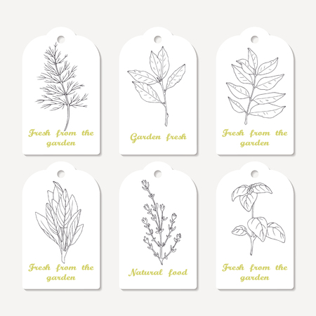 thyme: Tags collection with hand drawn spicy herbs. Sketched dill, bay leaf, curry, sage, thyme, basil. Culinary background. Vector illustration