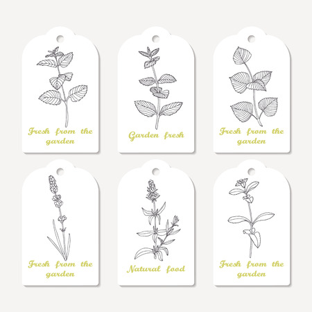 hyssop: Tags collection with hand drawn spicy herbs. Sketched melissa, mint, perilla, lavender, stevia, hyssop. Culinary background. Vector illustration