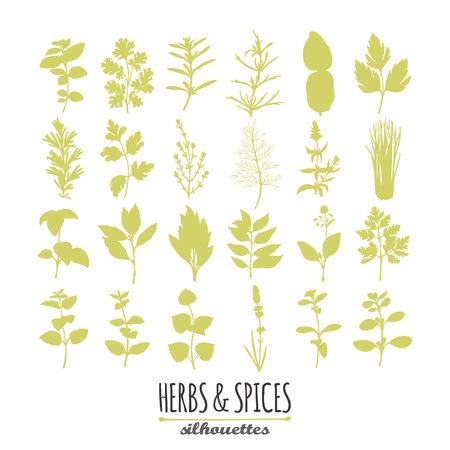 Collection of hand drawn spicy herbs silhouettes. Culinary elements for your design. Vector illustration Иллюстрация