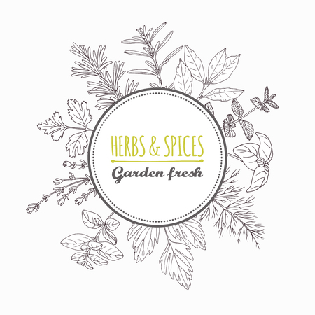 Circle label with hand drawn herbs and spices. Outline style seasonings with place for text. Vector illustration Illustration