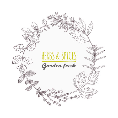 Round frame with hand drawn herbs and spices. Outline style seasoning background with place for text. Vector illustration