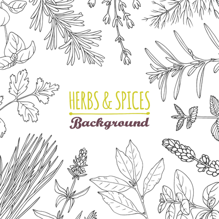 leaf line: Hand drawn herbs and spices background. Culinary template for your design. Vector illustration