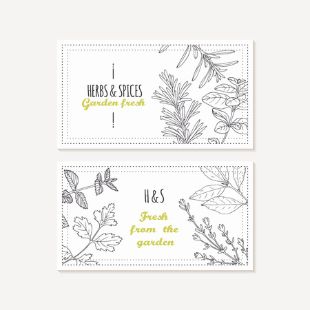 tarragon: Business card templates set with hand drawn spicy herbs. Sketched food background. Vector illustration