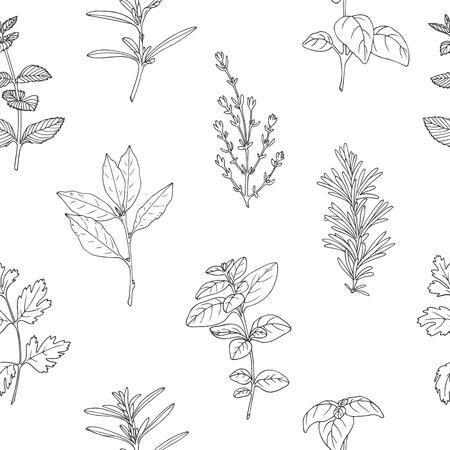 Jednolite wzór z ręcznie rysowane pikantnych ziół. Czarno-biała kuchnia tło ze świeżych przypraw w szkicu stile. ilustracji wektorowych Ilustracje wektorowe