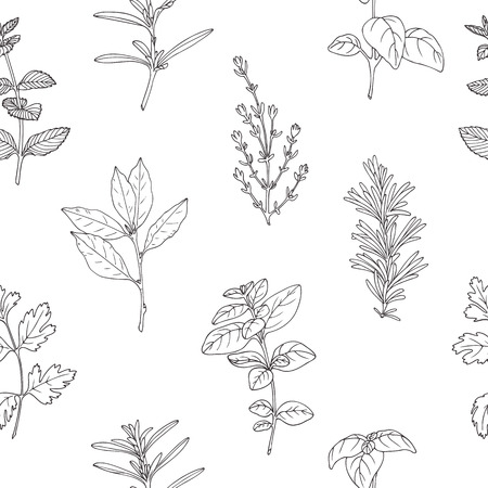cilantro: Seamless pattern with hand drawn spicy herbs. Black and white kitchen background with fresh seasoning in sketch stile. Vector illustration