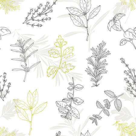 dill: Seamless pattern with hand drawn spicy herbs. Culinary kitchen background with fresh seasoning in sketch stile. Vector illustration