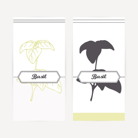 dried: Basil seasoning. Hand drawn branch with leaves in outline and silhouette style. Spicy herbs retro labels collection for food packaging or kitchen design. Vector illustration
