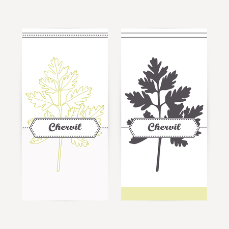 Chervil seasoning. Hand drawn branch with leaves in outline and silhouette style. Spicy herbs retro labels collection for food packaging or kitchen design. Vector illustration Stock Vector - 80204582