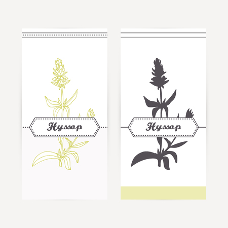 officinalis: Hyssop seasoning. Hand drawn branch with leaves and flowers in outline and silhouette style. Spicy herbs retro labels collection for food packaging or kitchen design. Vector illustration
