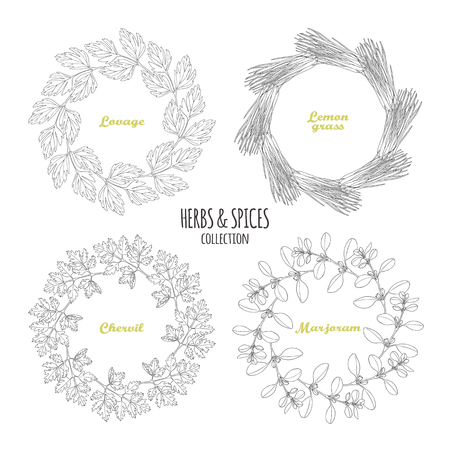 lovage: Spicy herb circle frames collection. Hand drawn lovage, lemongrass, chervil, marjoram. Kitchen background. Vector illustration Illustration