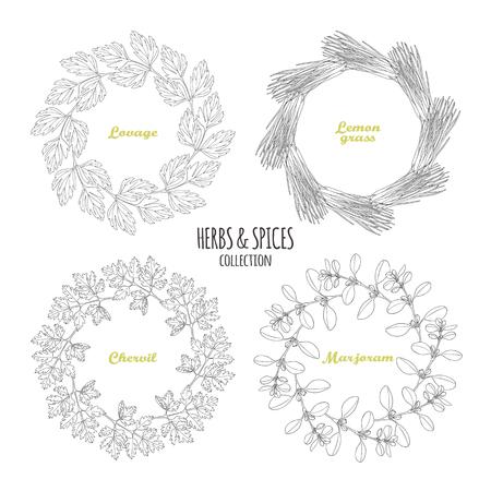 Spicy herb circle frames collection. Hand drawn lovage, lemongrass, chervil, marjoram. Kitchen background. Vector illustration Illustration