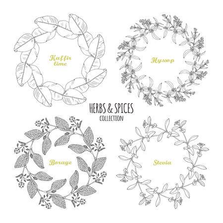 Spicy herb circle frames collection. Hand drawn kaffir lime, borage, hyssop, stevia. Kitchen background. Vector illustration Illustration