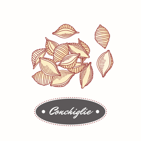 Hand drawn pasta conchiglie isolated on white. Element for restaurant or food package design. Vector illustration
