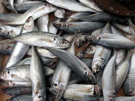 commodities: peces
