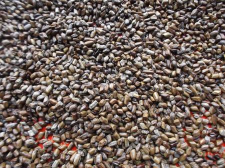 commodities: Buckwheat