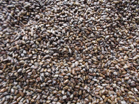 commodities: Alforfón Foto de archivo