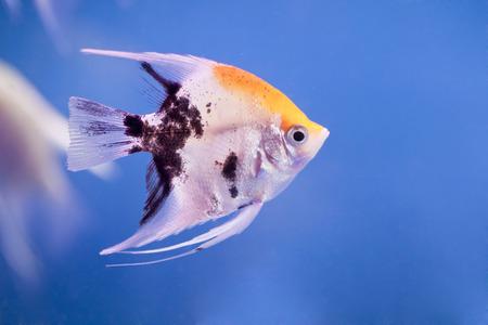 fishy: Aquarium tropical water, very beautiful Stock Photo