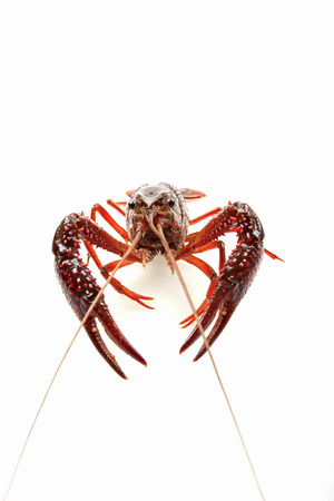 Lobster: general thick, long flesh thick, more than a hard spines, delicious, is a rare seafood.