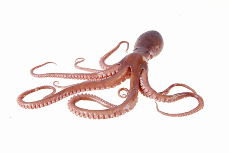 Octopus is a kind of sea animals, tastes very delicious.A close-up