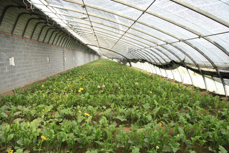 sufficient: In the greenhouse, the sunshine is very sufficient, planted flowers Stock Photo