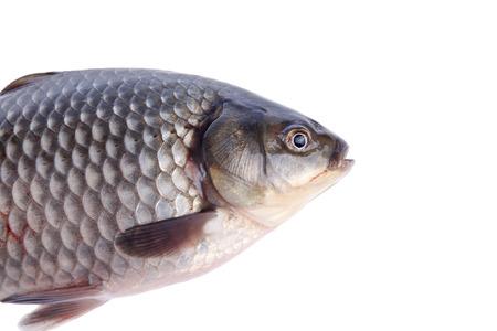 crucian carp: Close-up of crucian carp, white background Stock Photo