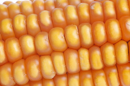 agrarian: sweet corn, close-up