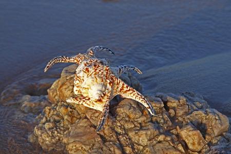 seashores: Shells on the seashore