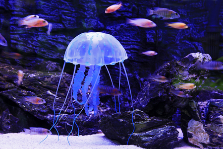 Jellyfish is a kind of Marine life
