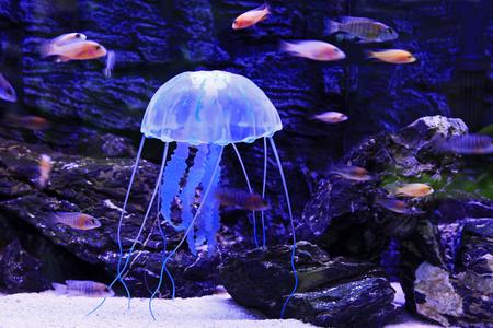 Quallen ist eine Art Meerestiere Standard-Bild - 50539414