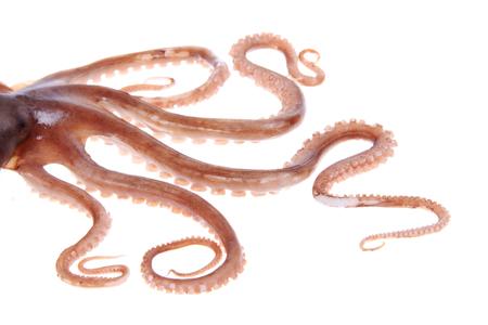 Octopus Tentakel Standard-Bild - 50887677
