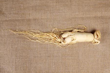 ginseng roots: Ginseng