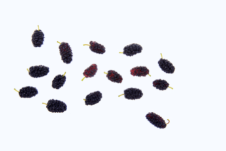 mulberry: Mulberry