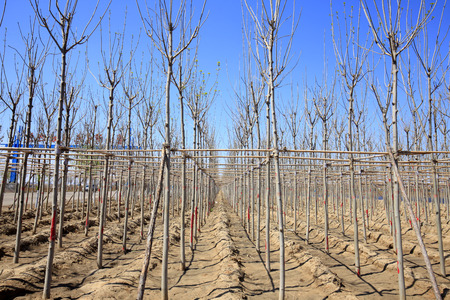 botanical farms: Young trees