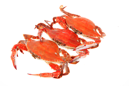 pincers: Crab