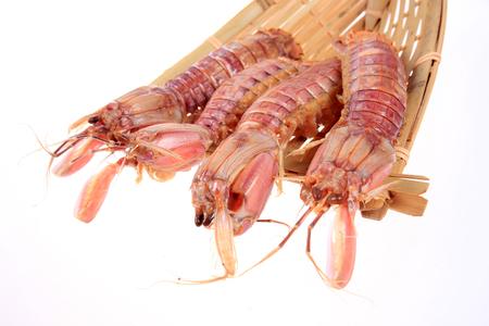 mantis: Mantis shrimp Stock Photo