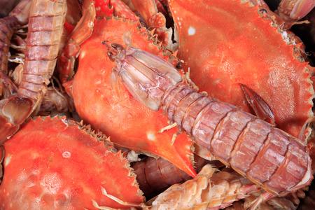Crab and Mantis shrimp Archivio Fotografico