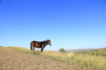 autumn horse: The grasslands of a horse in the autumn
