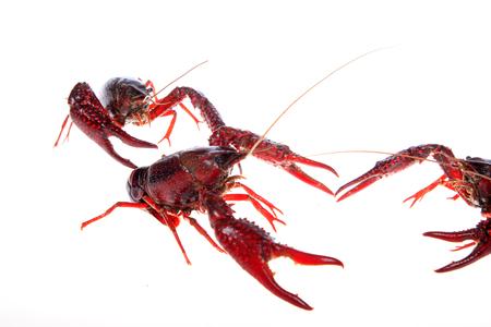 Crawfish, white background, close-up Stock Photo - 81476863