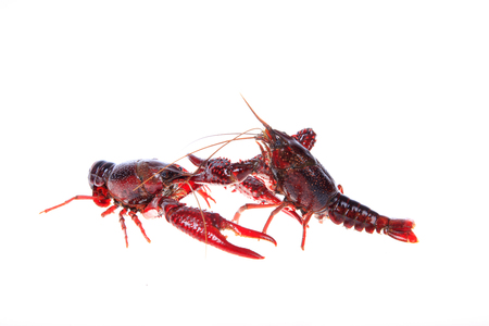 Crawfish on white background Stock Photo