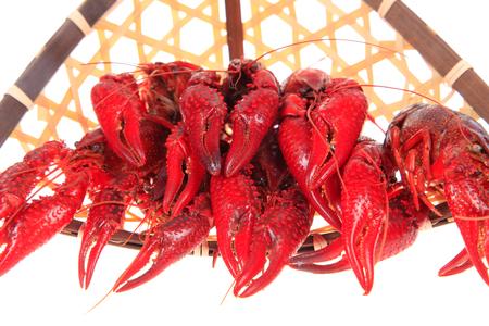 Crawfish on white background Stock Photo - 81477125